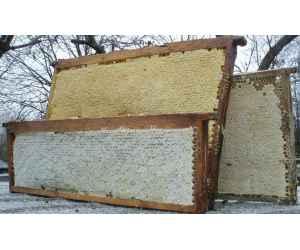 Мёд в сотах (рамочный), 1кг